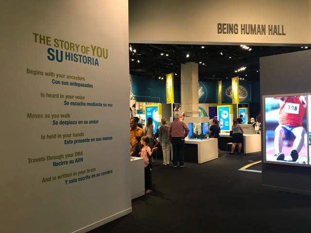 picture of a museum exhibit hall talking about human history