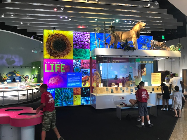 museum exhibit at perot museum