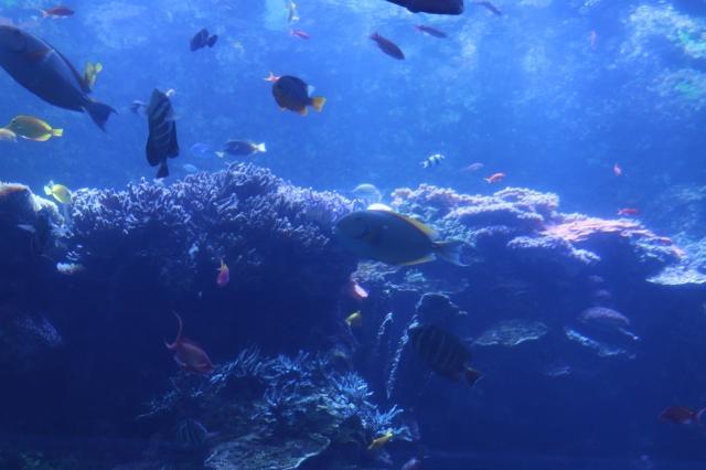 Georgia Aquarium Coral Reef
